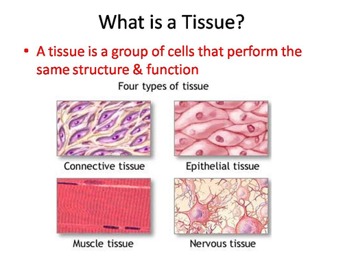 Types of Body Tissue by staceyowl Teaching Resources TES – Body Tissues Worksheet