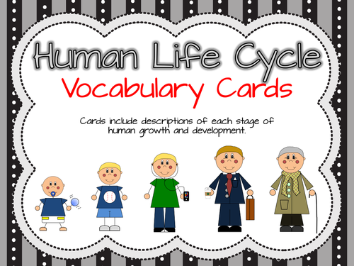 Human Life Cycle Vocabulary Cards