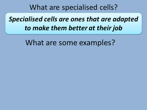 Differentiated specialised cells lesson