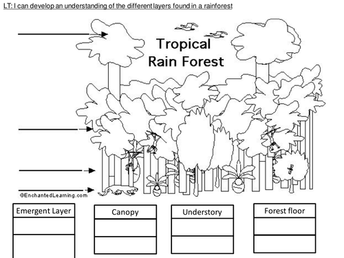 4 way differentiated Layers of the Rainforest worksheets by – Rainforest Worksheets