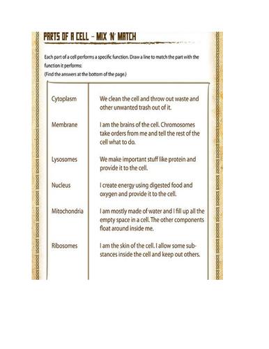 parts of a leaf worksheet pdf