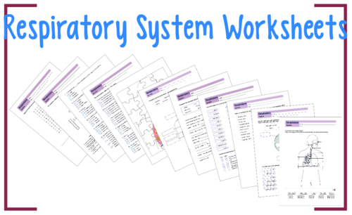 respiratory system worksheet pack by rahmich teaching resources tes. Black Bedroom Furniture Sets. Home Design Ideas