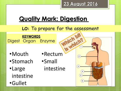 Journey of a Sandwich Digestion Quality Mark Assessment (FULL RESOURCE PACK)