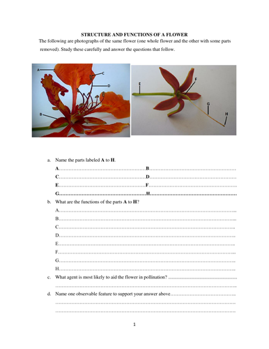 Structure and functions of a flower by jay5anum teaching resources structure and functions of a flower by jay5anum teaching resources tes ccuart Choice Image