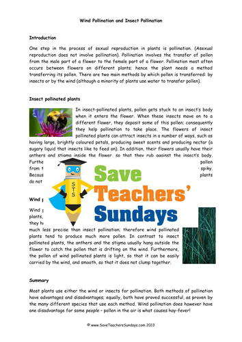 Wind Pollination and Insect Pollination KS2 Lesson Plan, and Worksheet