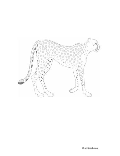 Coloring Page: Cheetah