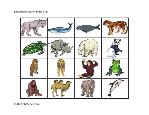Bingo Cards: Endangered Animals (elem/upper elem) - color