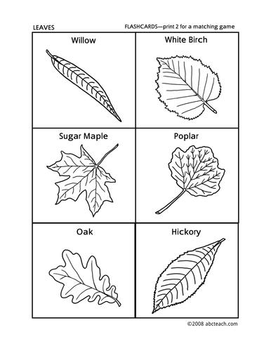 Flashcards: Leaves (preschool/primary)
