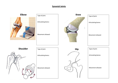 Synovial Joints Worksheet