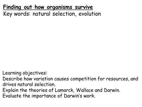 Printables Genetic Variation Worksheet genetic variation worksheet vintagegrn irade co