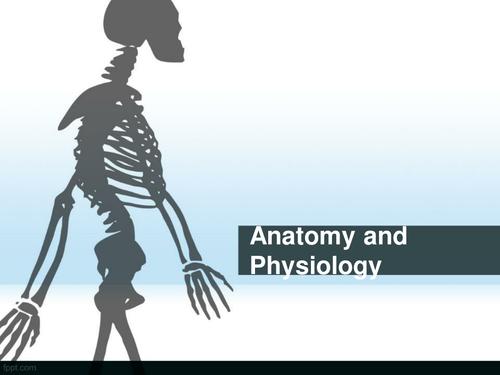NEW GCSE EDEXCEL skeletal/joints