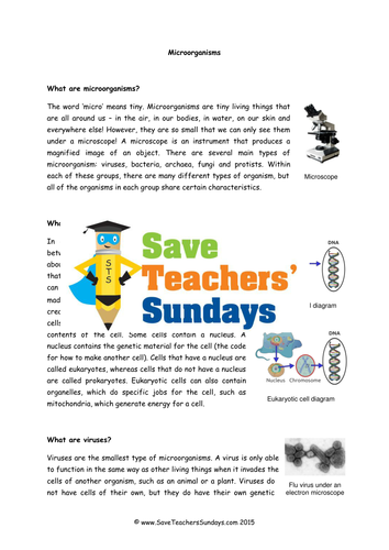 Bacteria And Viruses Ks2 Lesson Plan Information Text And Worksheet