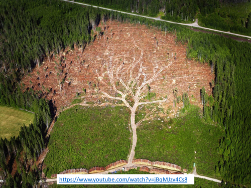 The Changing Rates of Deforestation - Living World - AQA2016
