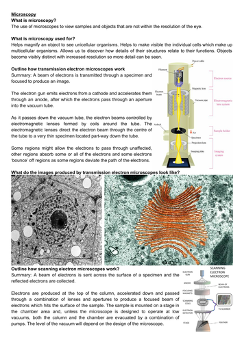 A level biology revision: microscopy