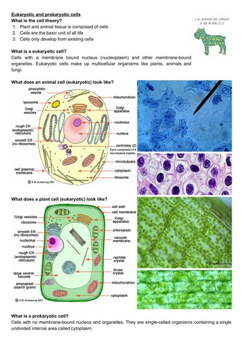 A level biology revision: cell structure