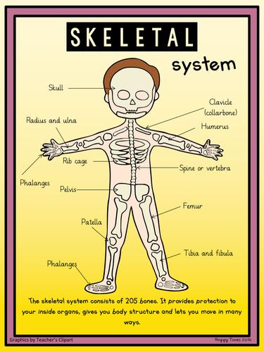 Human Skeletal System Diagram Poster Worksheet By Hoppytimes