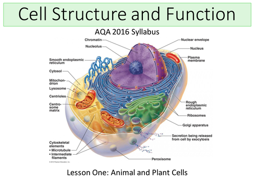 New gcse biology b1 cell structure transport by awindows new aqa 2016 biology b1 cell structure and transport lesson 1 ccuart Image collections