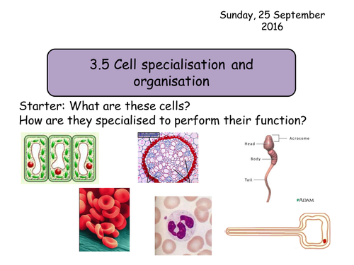 Section 2. Cells. 3.5 Cell specialisation and organisation NEW Year 12 Biology specification