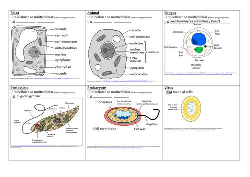 Kingdoms Viruses Cells Venn Diagram Activity