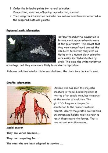 KS3 and 4 natural selection