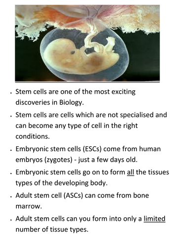 KS4 New AQA 2016  B2 cell division L3 and 4 Stem cells and ethics