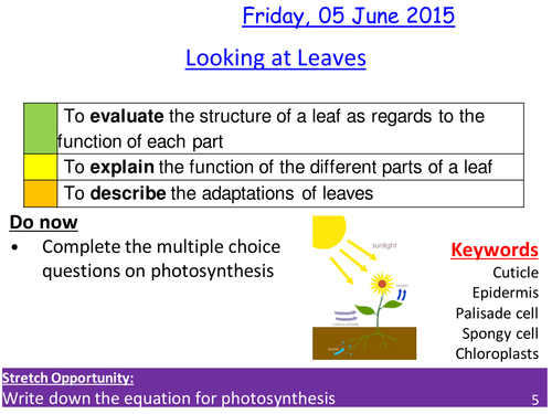 Leaves and photosynthesis - Structure and function