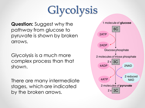 AQA A-level Biology (2016 specification). Section 5 Topic 14: Respiration - Link & Krebs Cycle