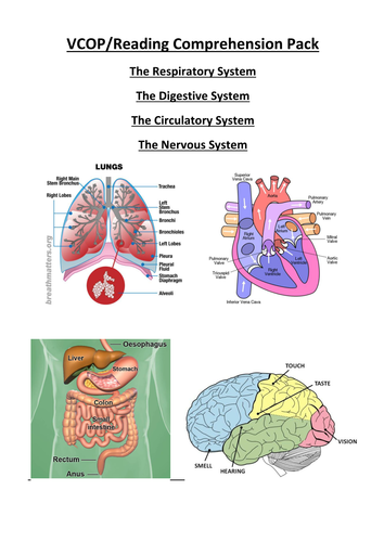 Clever bee resources teaching resources tes ks2ks3 science english pack vcop comprehension digestive respiratory ccuart Choice Image