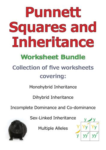 Punnett Squares and Inheritance DISCOUNT BUNDLE SAVE 20%