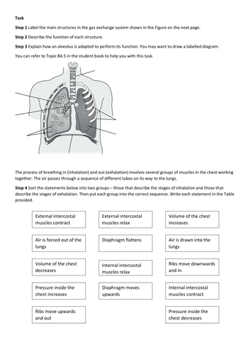 KS4 AQA New 2016 B4 Organising animals and plants L5 Breathing and gas exchange