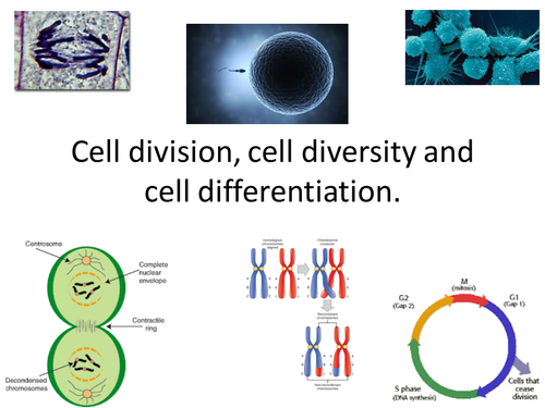 biology cell notes Literature notes biology cell cycle all subjects mitosis is the phase of the cell cycle during which the cell divides into two daughter cells.
