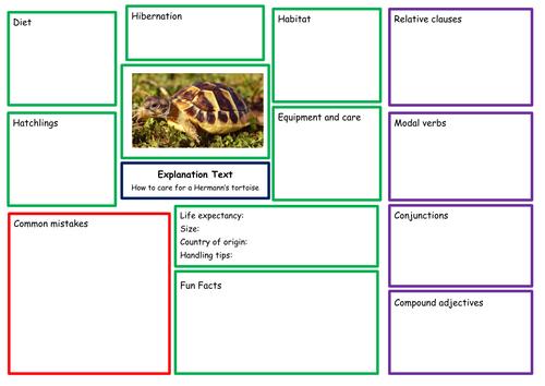 Hermann's tortoise explanation text planning guide. Editable