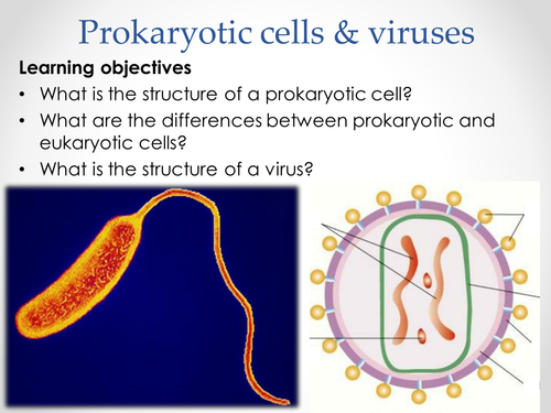 AQA AS & A-level Biology (2016 specification). Section 2 Topic 3: Cells. 6 Prokaryotic cells viruses