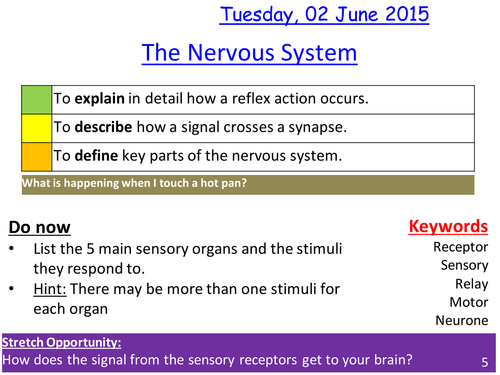 Nervous system and immune system lesson / revision lesson