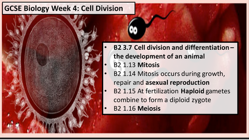 GCSE Cell Division