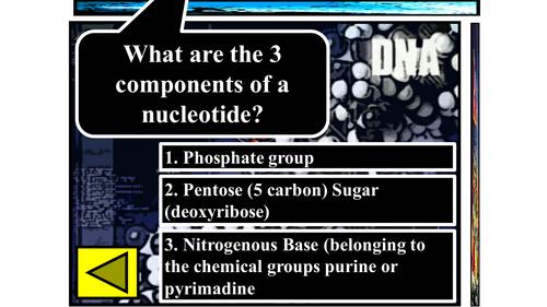 GCSE Nucleotides