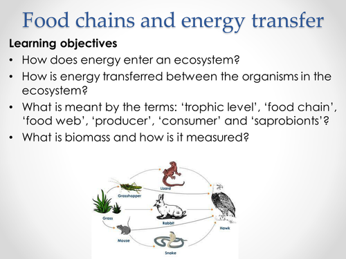 AQA A-level Biology (2016 specification). Section 5 Topic 13: Energy & ecosystems. 1 Food chains