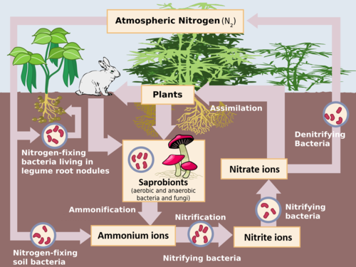 AQA A-level Biology (2016 specification). Section 5 Topic 13: Energy & ecosystems
