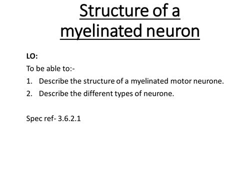AQA Alevel biology structure of a neuron