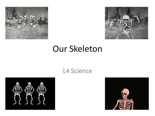 Year 8 Skeleton and Muscles Topic