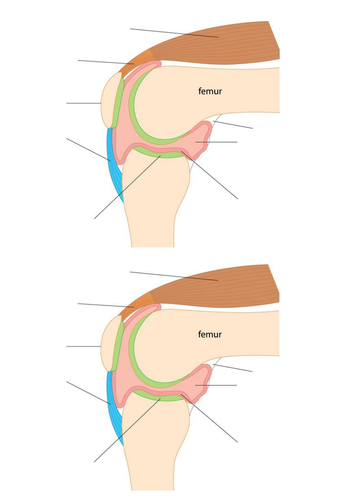 Ks3 joints movement by jamesjosephrogers teaching resources tes ccuart Choice Image
