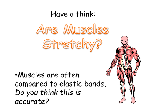 KS3 - Muscles & Movement