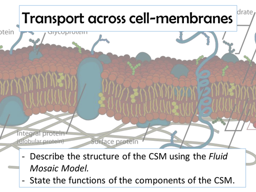 AQA AS - Cell surface membrane
