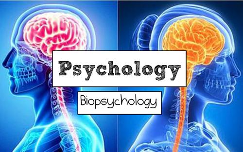 AQA A Level Psychology (New Spec): Biopsychology FULL Unit of Work - Free Sample