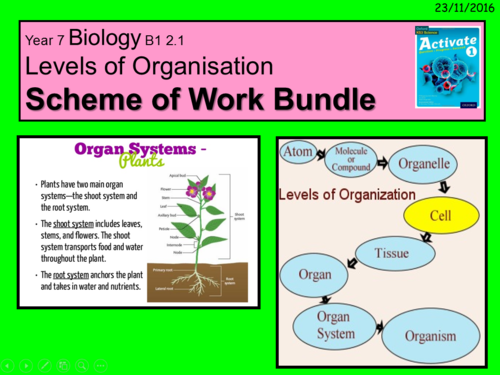 Year 7 Activate book 1 Biology B1.2  Structure and function of body systems