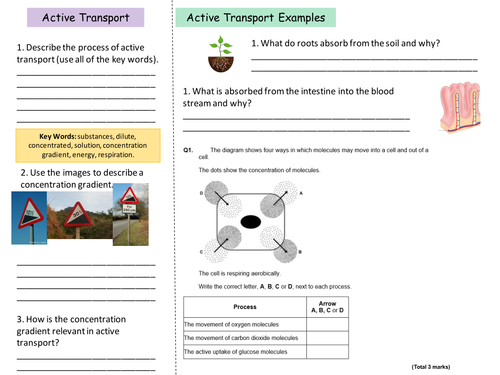 NEW AQA B1 Diffusion and Active Transport by ellejayd24 – Active Transport Worksheet