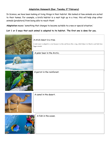 adaptation homework worksheet living things in their habitat by v1990 teaching resources. Black Bedroom Furniture Sets. Home Design Ideas