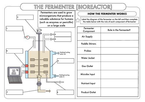 Gcse Biotechnology The Fermenter Worksheet By Beckystoke
