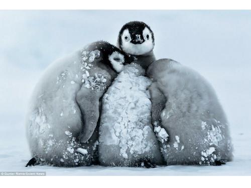Penguin Huddling investigation