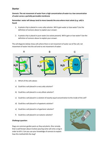 osmosis starter task gcse biology by cmrcarr teaching resources tes. Black Bedroom Furniture Sets. Home Design Ideas